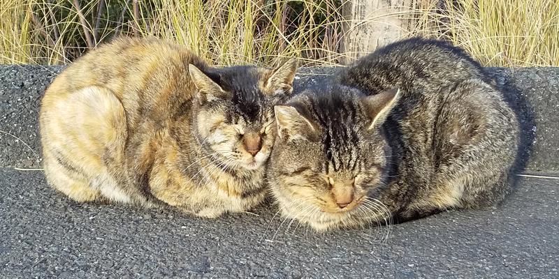 桐垣展望台の野良猫