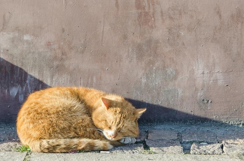 猫が安心しきって寝ている写真