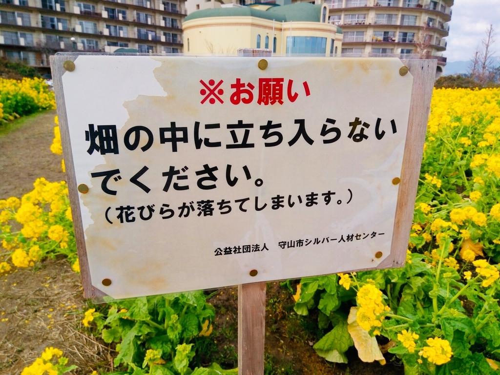 f:id:shigadekosodate:20190205124008j:plain