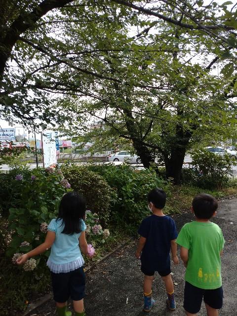 f:id:shigakkan-u-k:20200708160412j:image