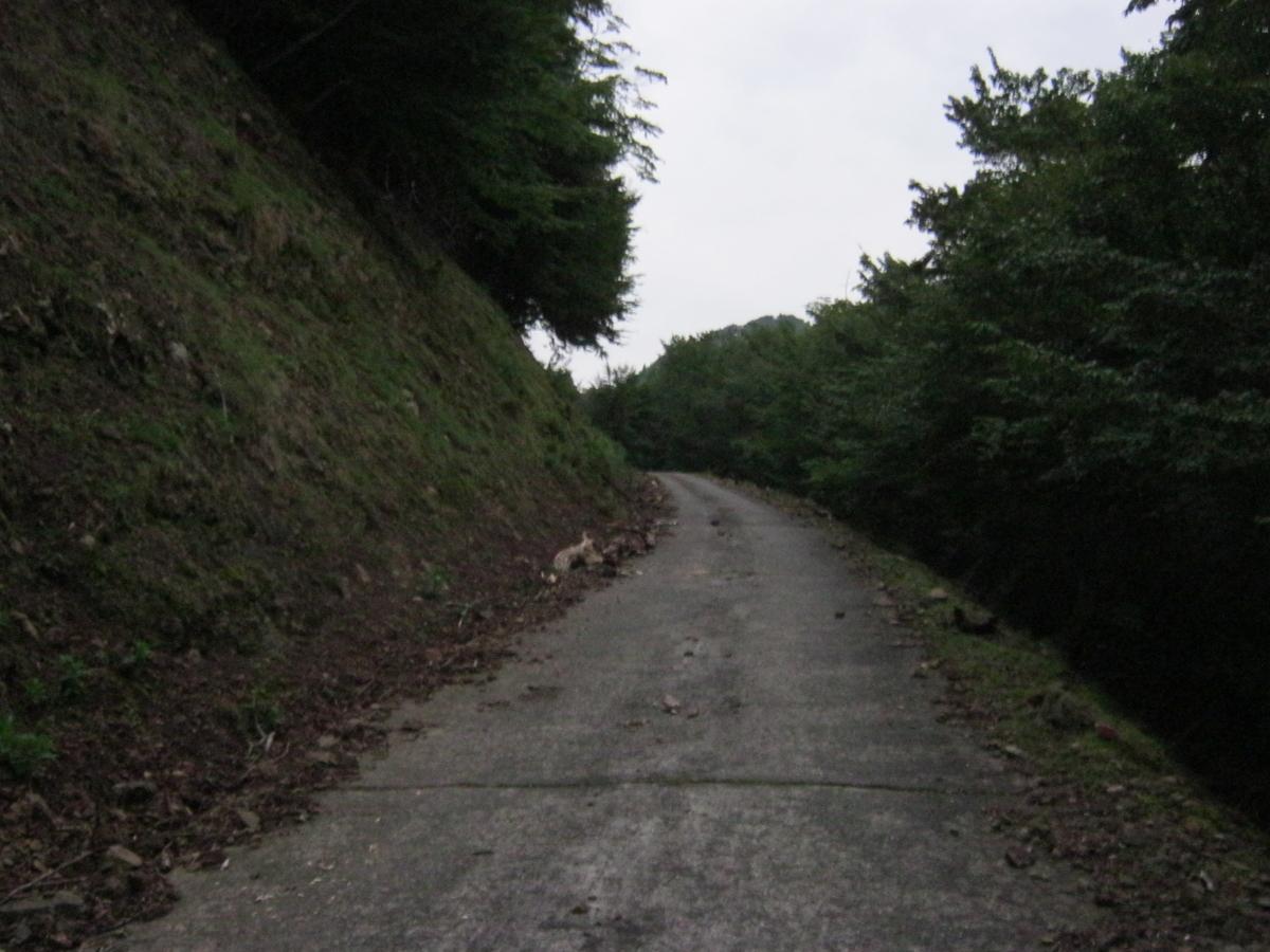 f:id:shiganosato-goto:20191126220442j:plain