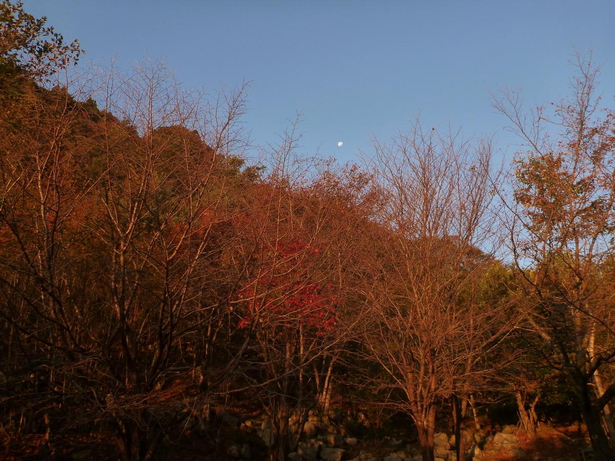 f:id:shiganosato-goto:20201107172531j:plain