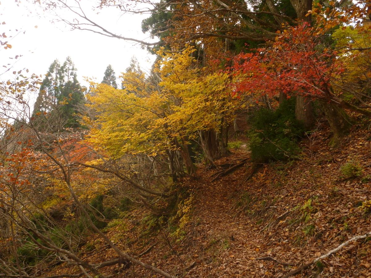 f:id:shiganosato-goto:20201107201132j:plain