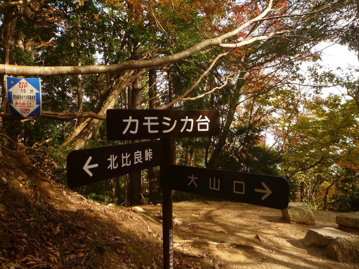 f:id:shiganosato-goto:20201107202342j:plain