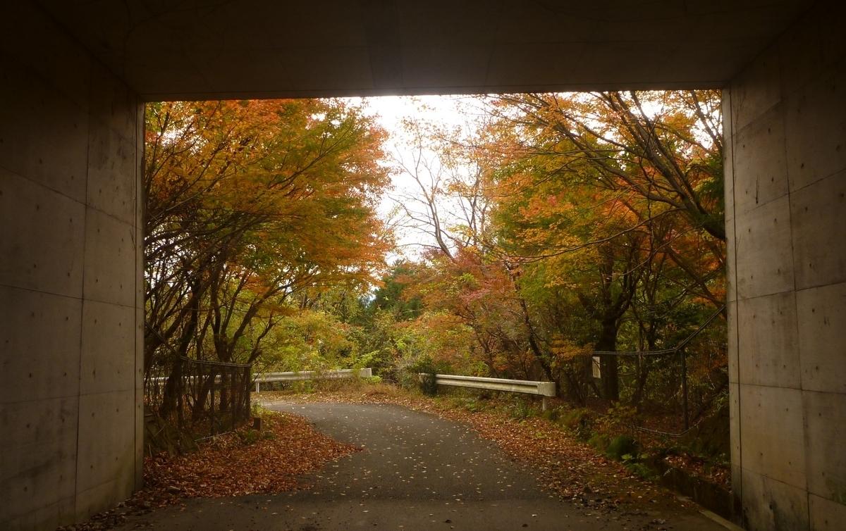 f:id:shiganosato-goto:20201219204757j:plain