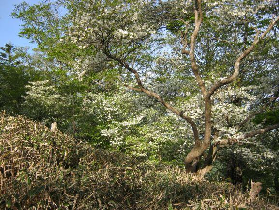 f:id:shiganosato-goto:20210614171302j:plain