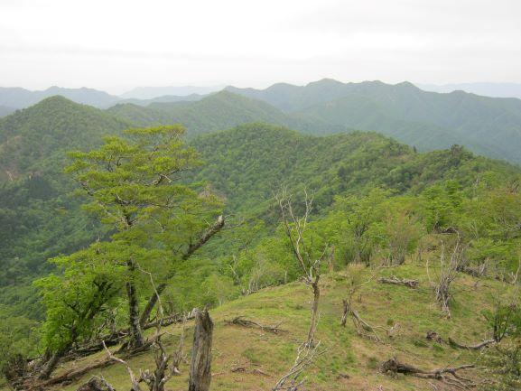 f:id:shiganosato-goto:20210614173727j:plain