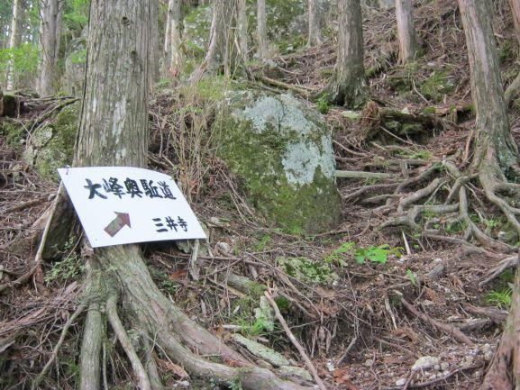 f:id:shiganosato-goto:20210615075157j:plain