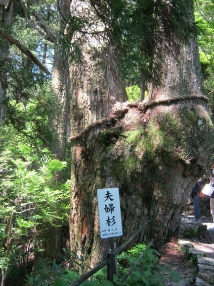 f:id:shiganosato-goto:20210615082027j:plain