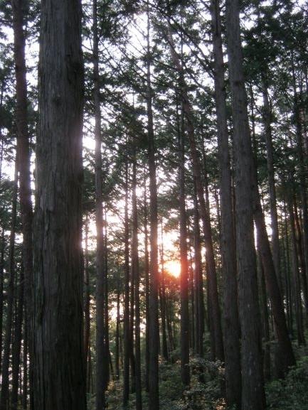 f:id:shiganosato-goto:20210615141301j:plain