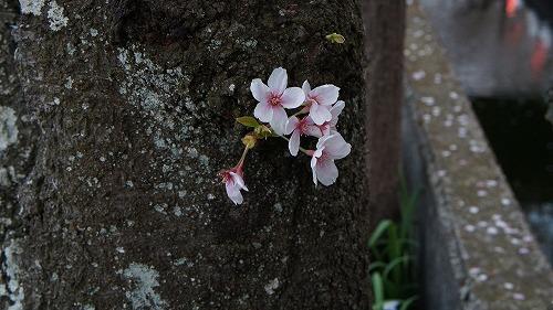 f:id:shigechan1949:20180402204338j:image:w640