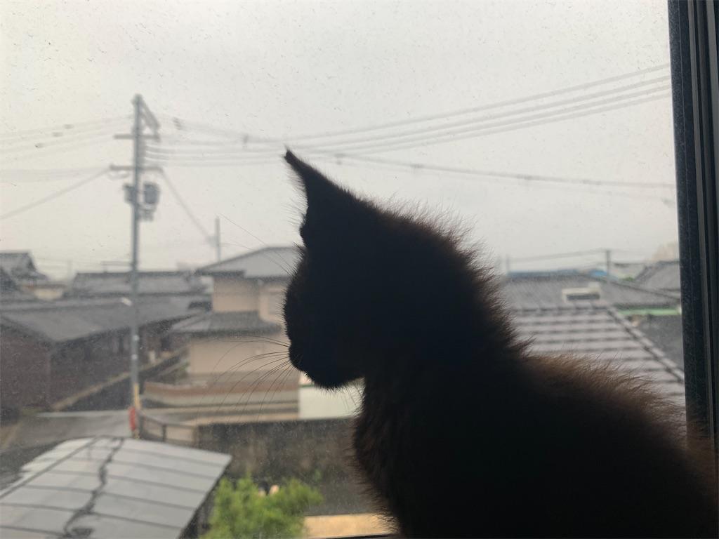 f:id:shigechikun:20200726115609j:image