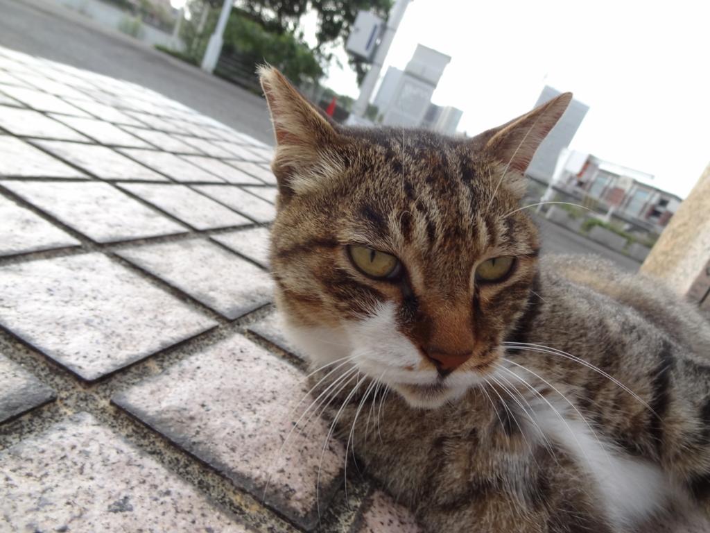 f:id:shigeo-t:20160831032950j:plain