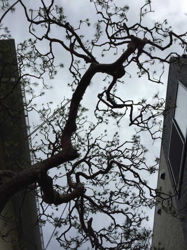 f:id:shigeru0214jp:20150421084431j:plain