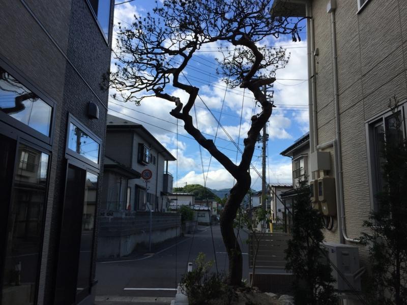 f:id:shigeru0214jp:20150604081745j:plain
