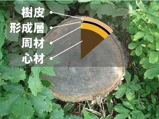 f:id:shigeruna:20060714085953j:image