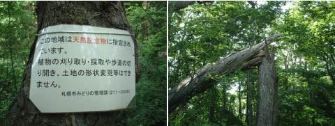 f:id:shigeruna:20060720000406j:image