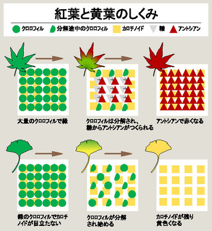 f:id:shigeruna:20061003015104j:image