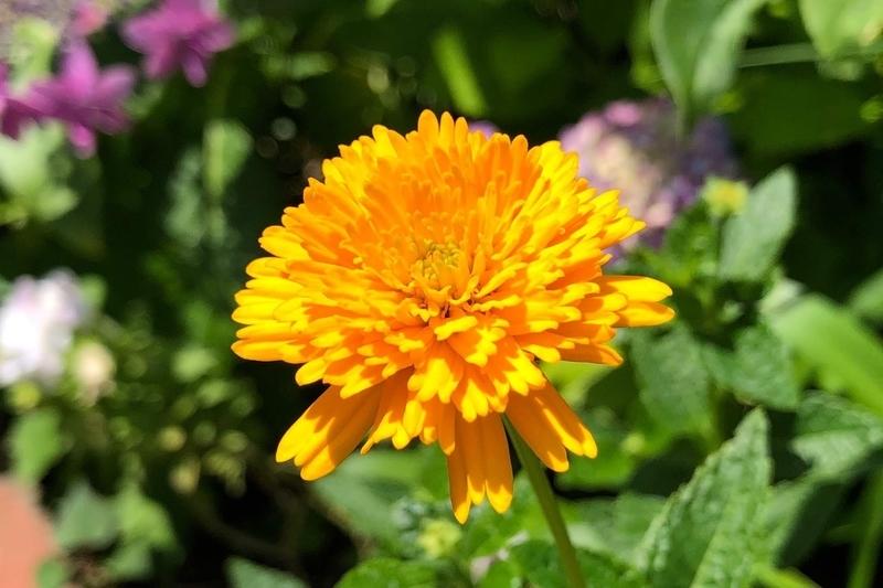 iPhone Xで撮影した花