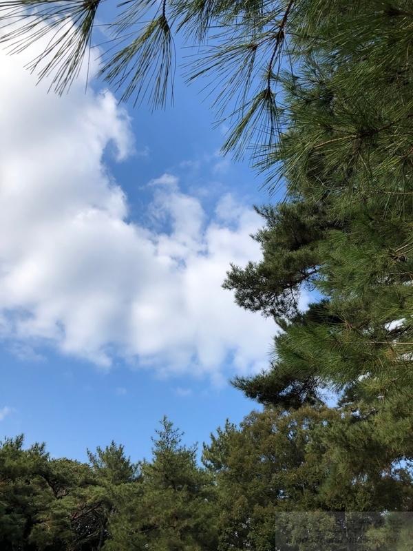 iPhone Xで撮った空と松
