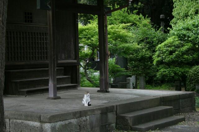 f:id:shigeyuki0506:20210509141805j:image