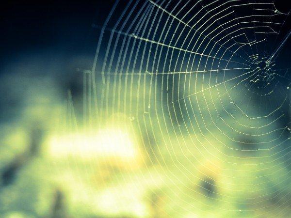 蜘蛛の糸の画像