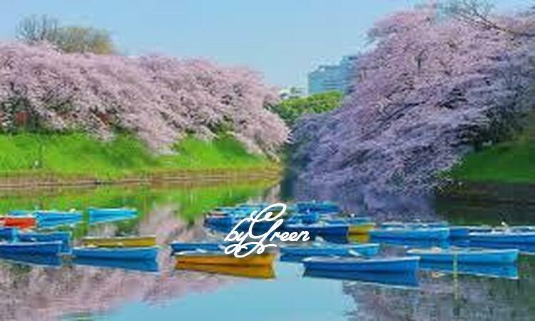 f:id:shiho196123:20190418133532j:plain