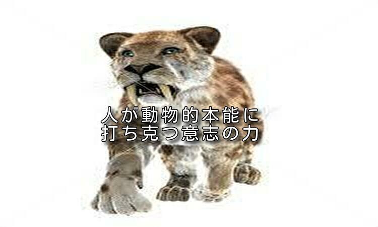 f:id:shiho196123:20190502204748j:plain