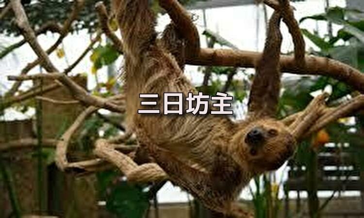 f:id:shiho196123:20190614172004j:plain