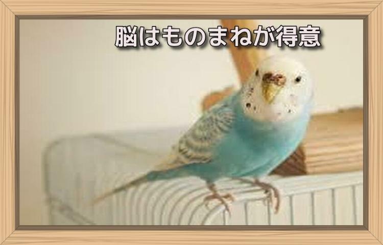 f:id:shiho196123:20190713125320j:plain