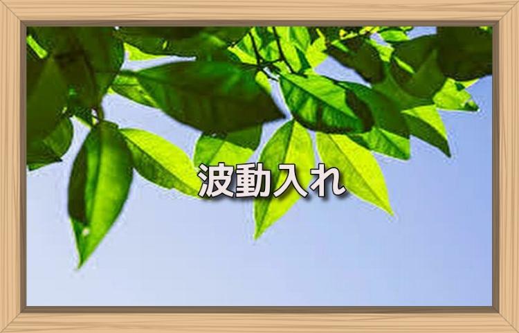 f:id:shiho196123:20190718171211j:plain