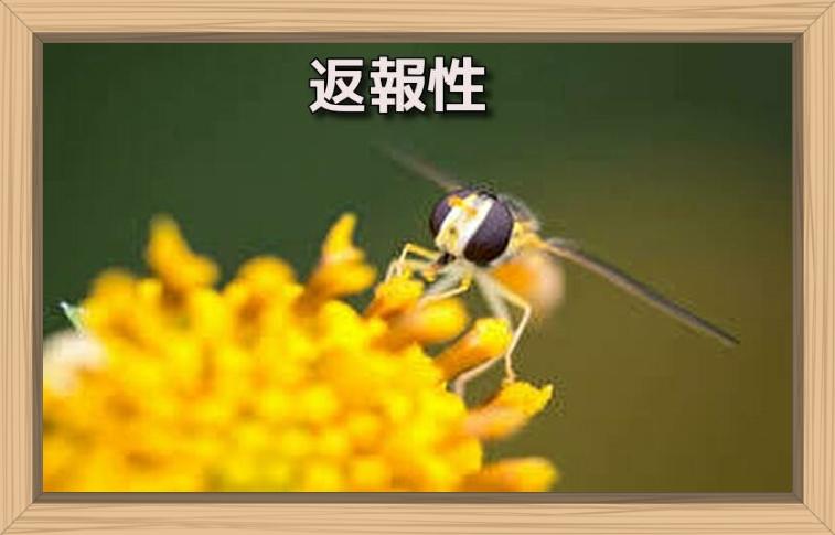 f:id:shiho196123:20190721135619j:plain