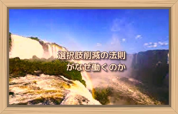 f:id:shiho196123:20190808194127j:plain