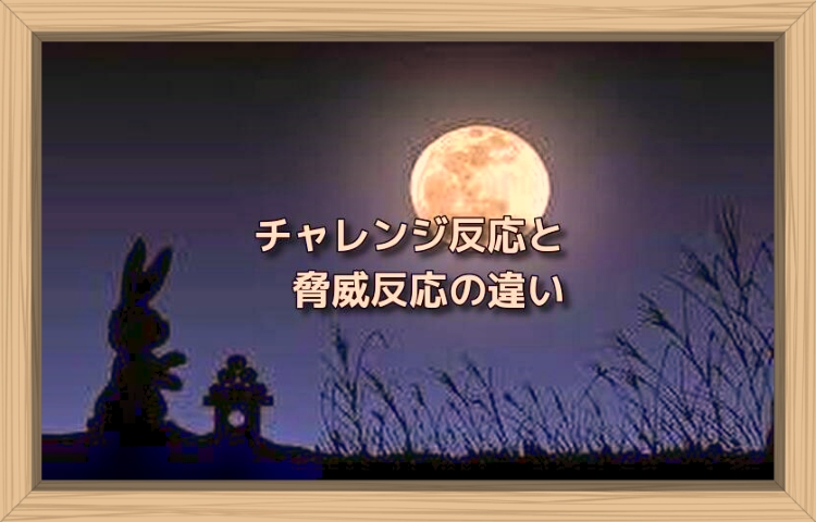 f:id:shiho196123:20190816112100j:plain