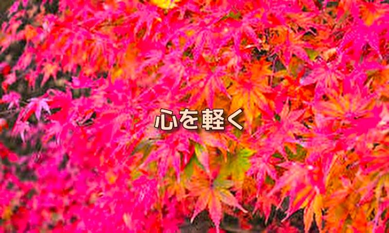 f:id:shiho196123:20191008180311j:plain