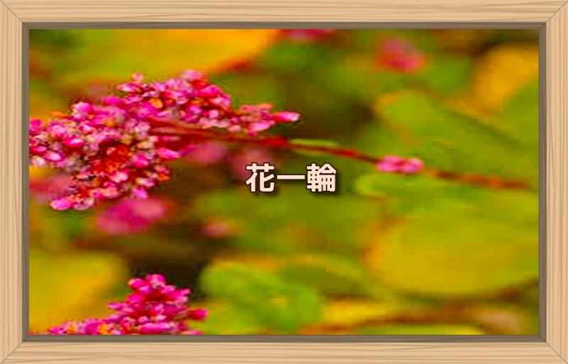 f:id:shiho196123:20191010091913j:plain