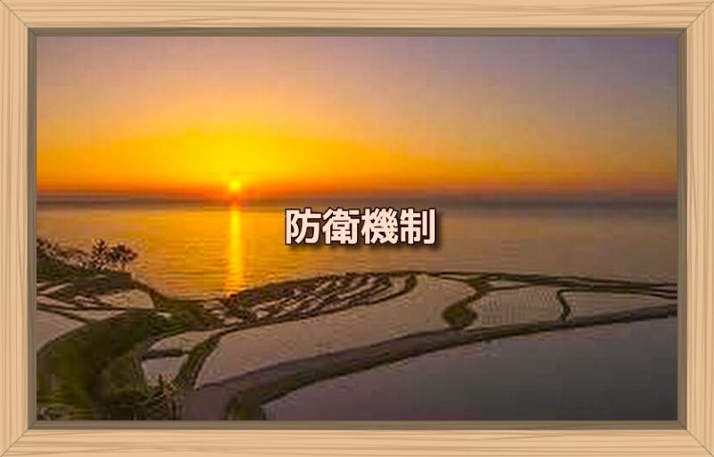 f:id:shiho196123:20191010215209j:plain