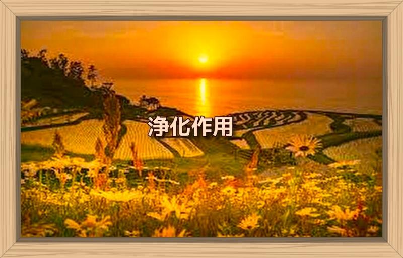 f:id:shiho196123:20191019010847j:plain