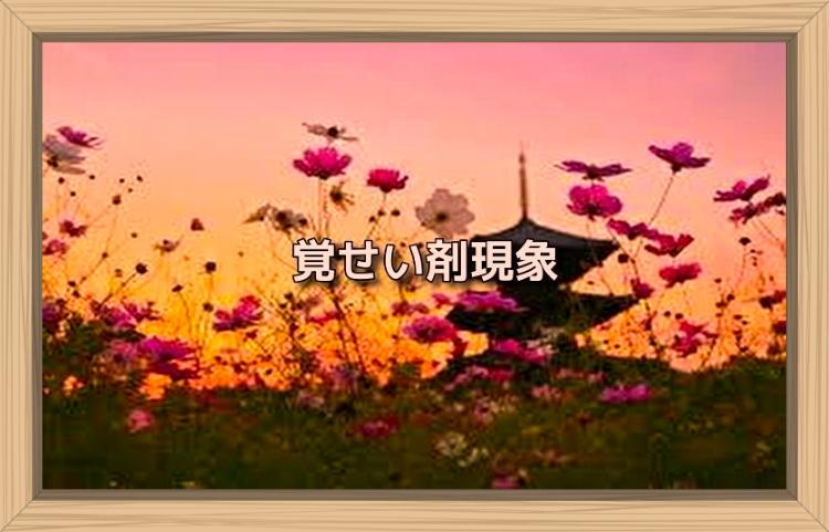 f:id:shiho196123:20191109143943j:plain