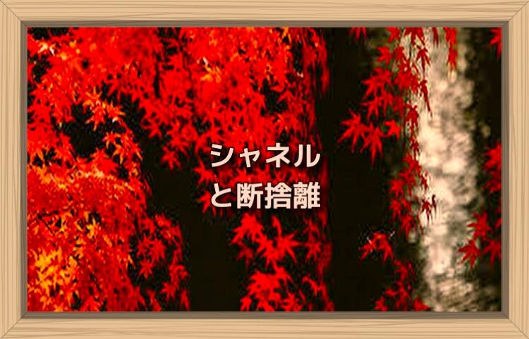 f:id:shiho196123:20191113172658j:plain
