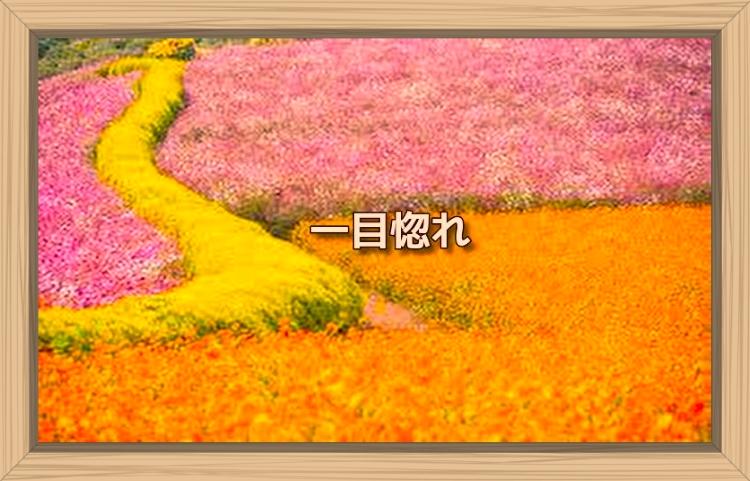f:id:shiho196123:20191114095705j:plain