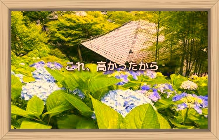 f:id:shiho196123:20191120124445j:plain