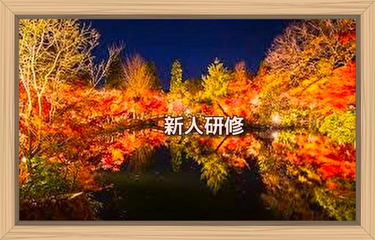 f:id:shiho196123:20191121090456j:plain