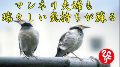 f:id:shiho196123:20210720173745p:plain
