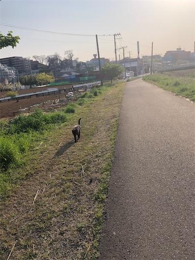 f:id:shihoko123:20200408231858j:image