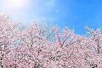 f:id:shihomaru:20170319033246j:plain