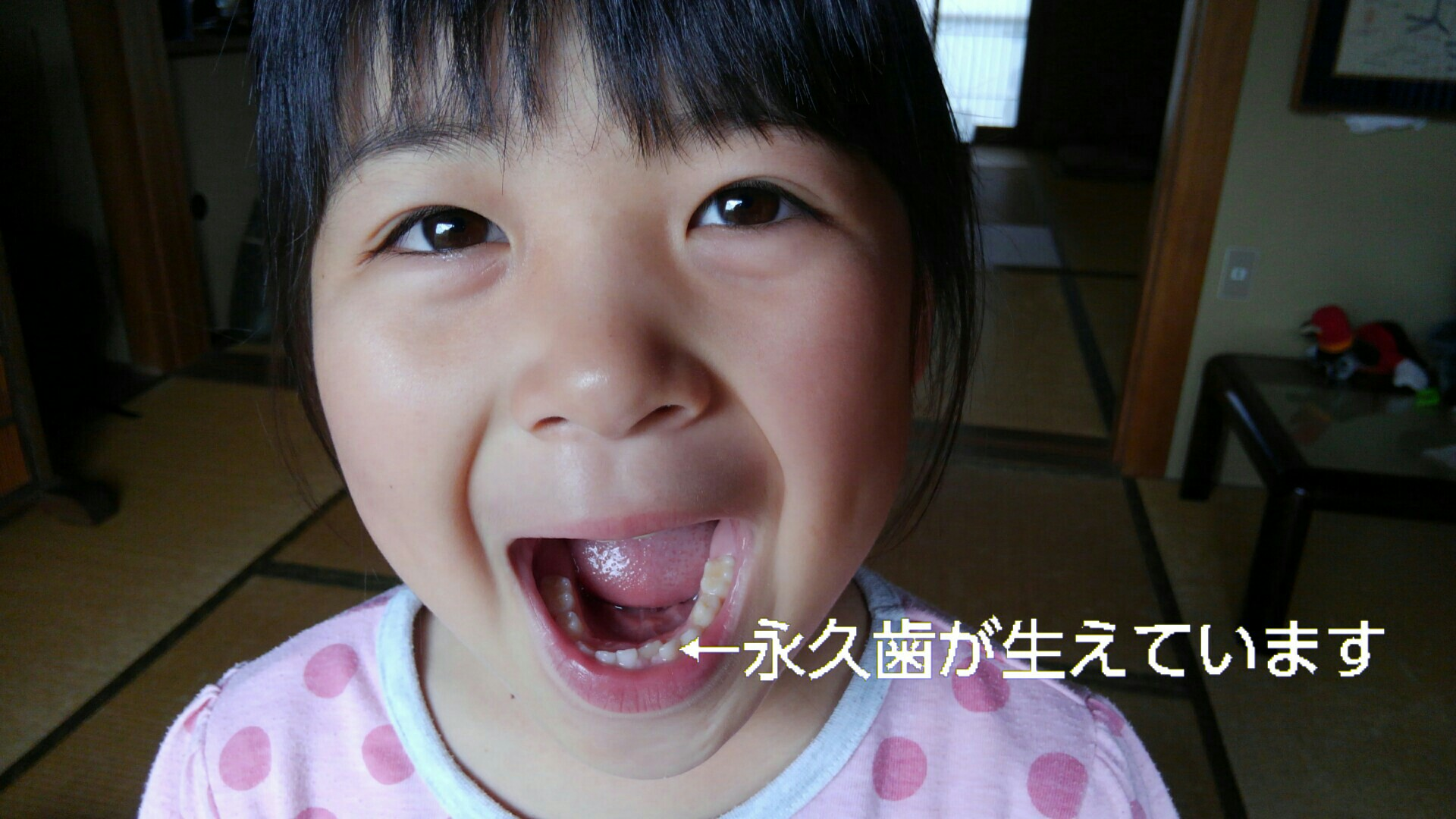 f:id:shihomaru:20170603141943j:image