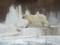 なんか見てられないくらい可哀想だった白熊くん。