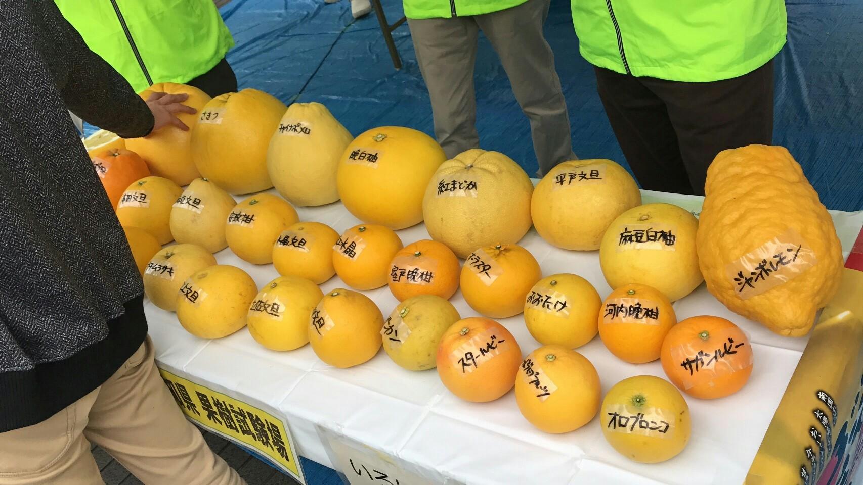 f:id:shiika-0620:20170307163610j:image