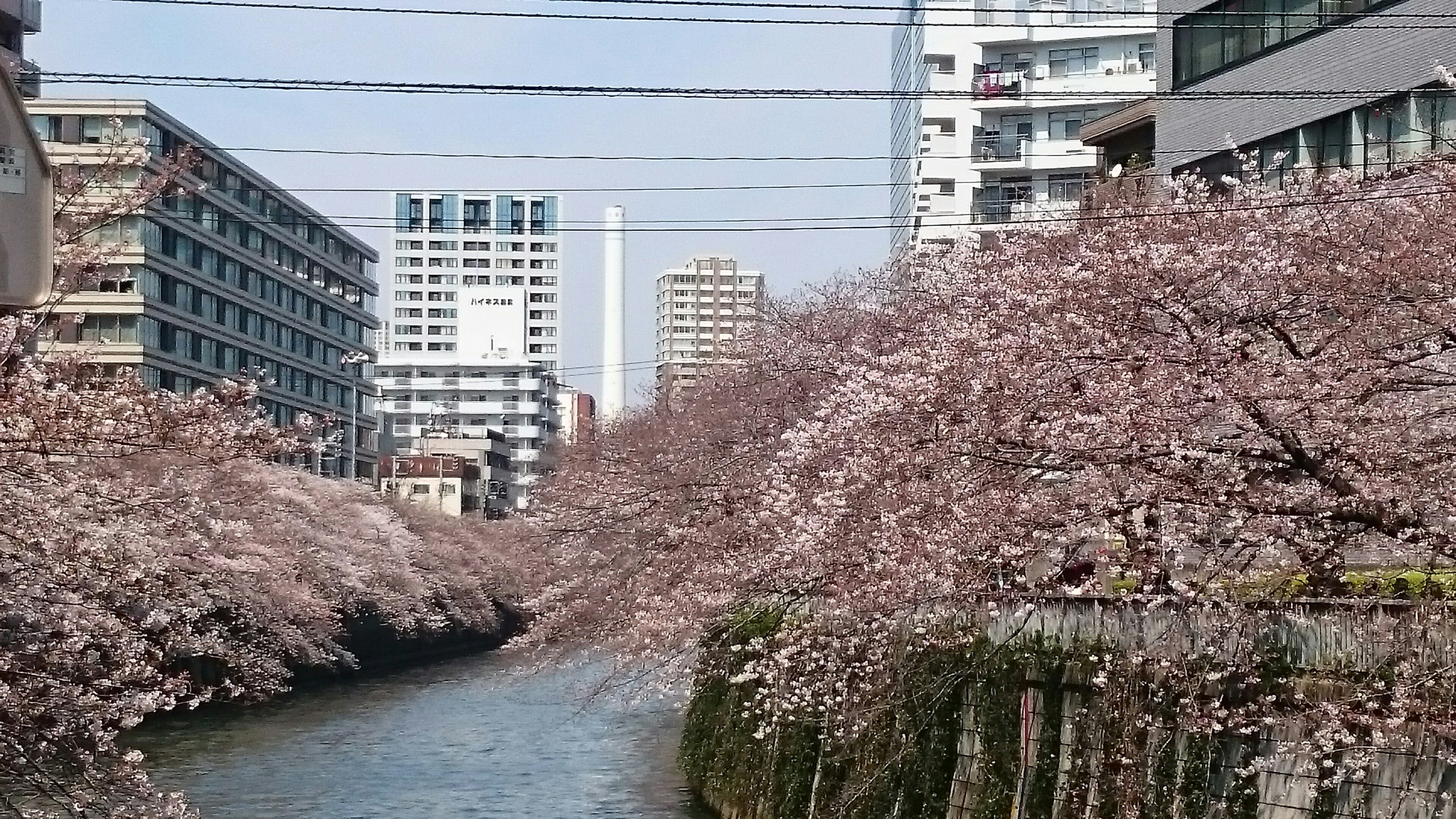 f:id:shiika-0620:20170405182305j:image